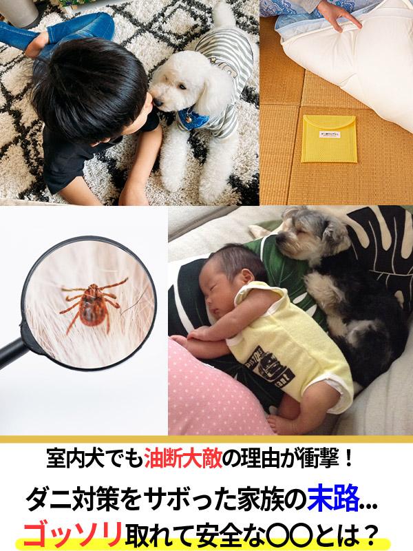 """""""室内犬でも油断大敵!<br/"""